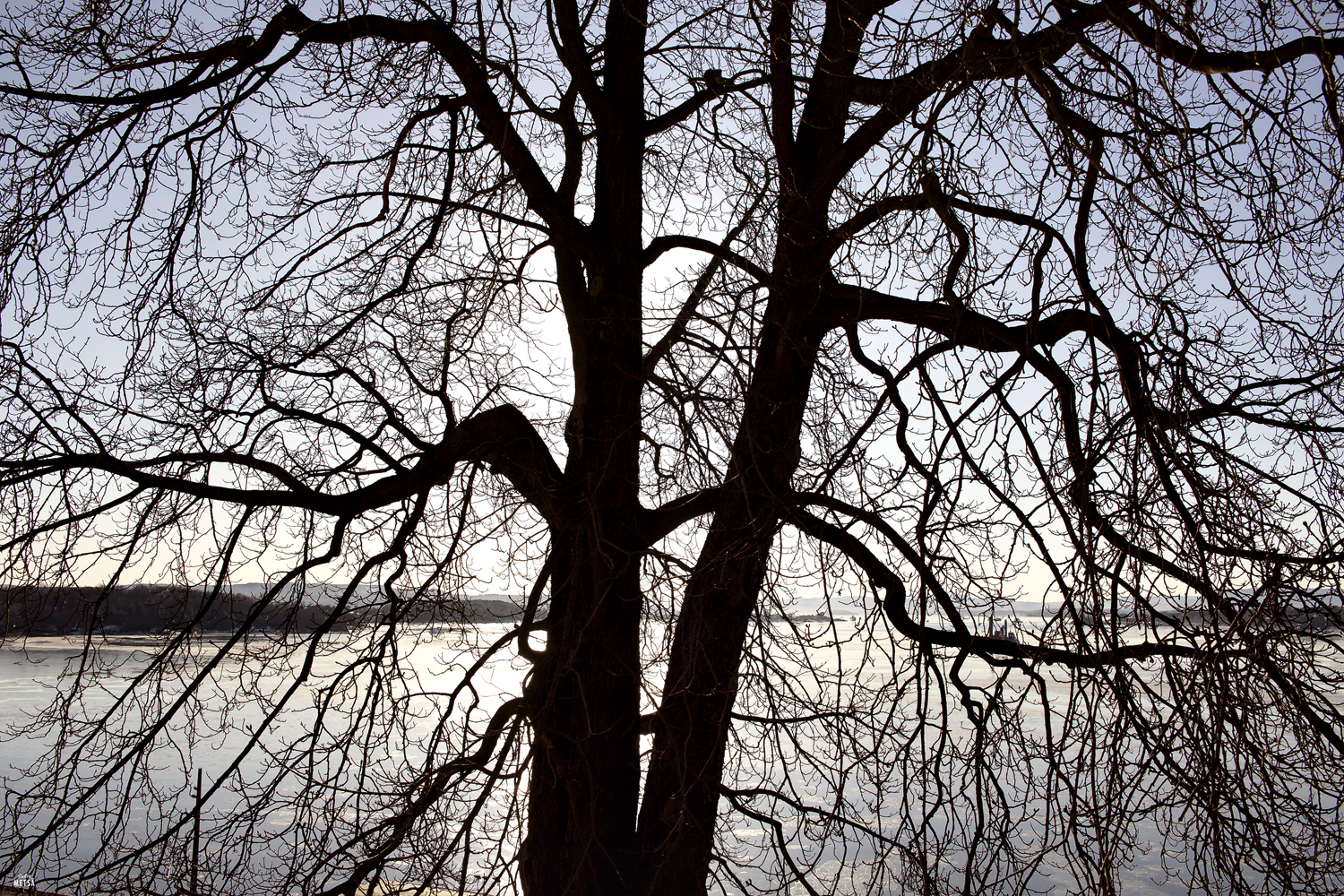 Outline of tree by Studio Metsä Photography