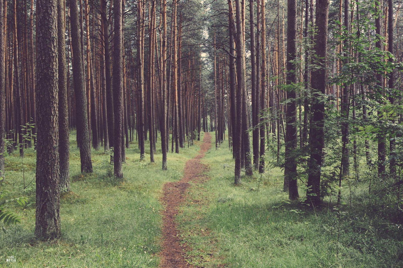 Life path Studio Metsä Tallinn